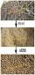 小麦秸秆颗粒机/秸秆颗粒设备/秸秆颗粒压制机